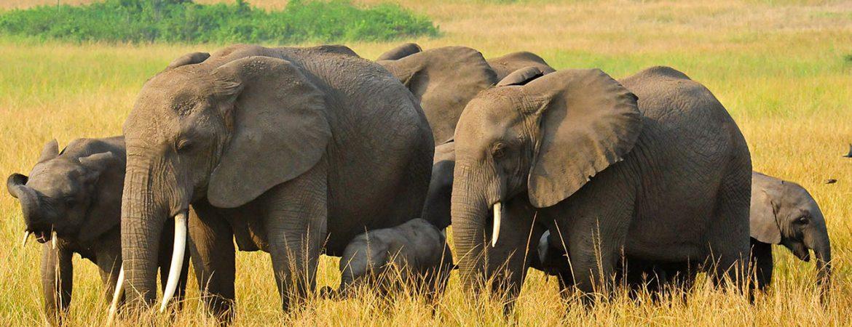 20 Days Long Uganda Safari Holiday
