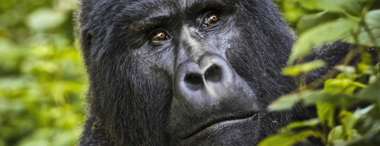 Gorilla Sitemap Pages