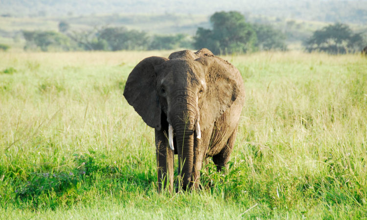 25 Days Grand Escape in Uganda