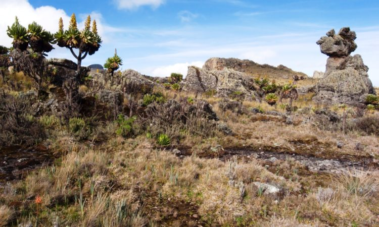 3 Days Mount Elgon Hiking Safari