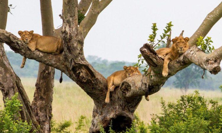 4 Days Uganda Gorillas & Wildlife Safari