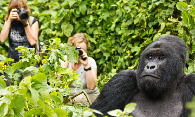 5 Days Gorilla Special & Akagera Wildlife Safari