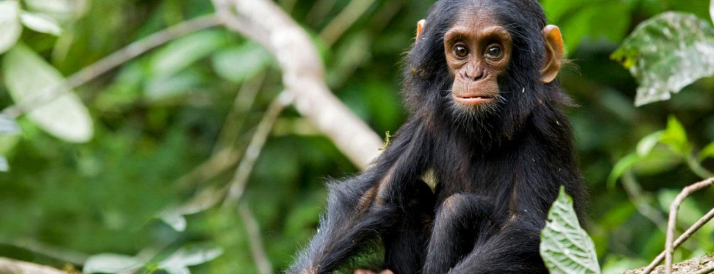 5 Days Uganda Chimpanzee & Wildlife Safari