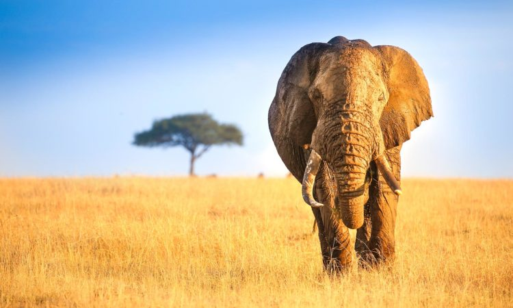 6 Days Bwindi Gorillas & Masai Mara Safari
