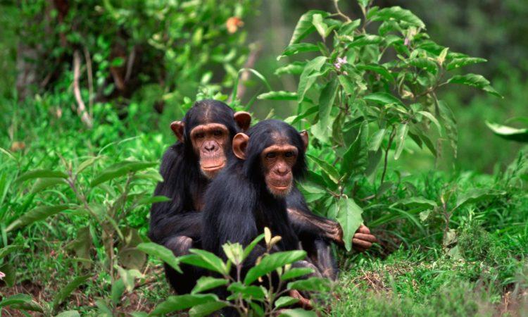 6 Days Double Gorilla Trek & Nyungwe Chimps