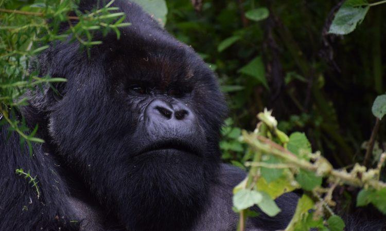 7 Days Rwanda Gorilla Trek & Big Five Safari