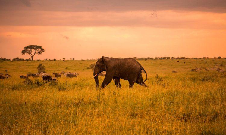 7 Days Rwanda Gorillas & Serengeti Wildlife Safari
