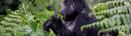 8 Days Rwanda Classic Safari