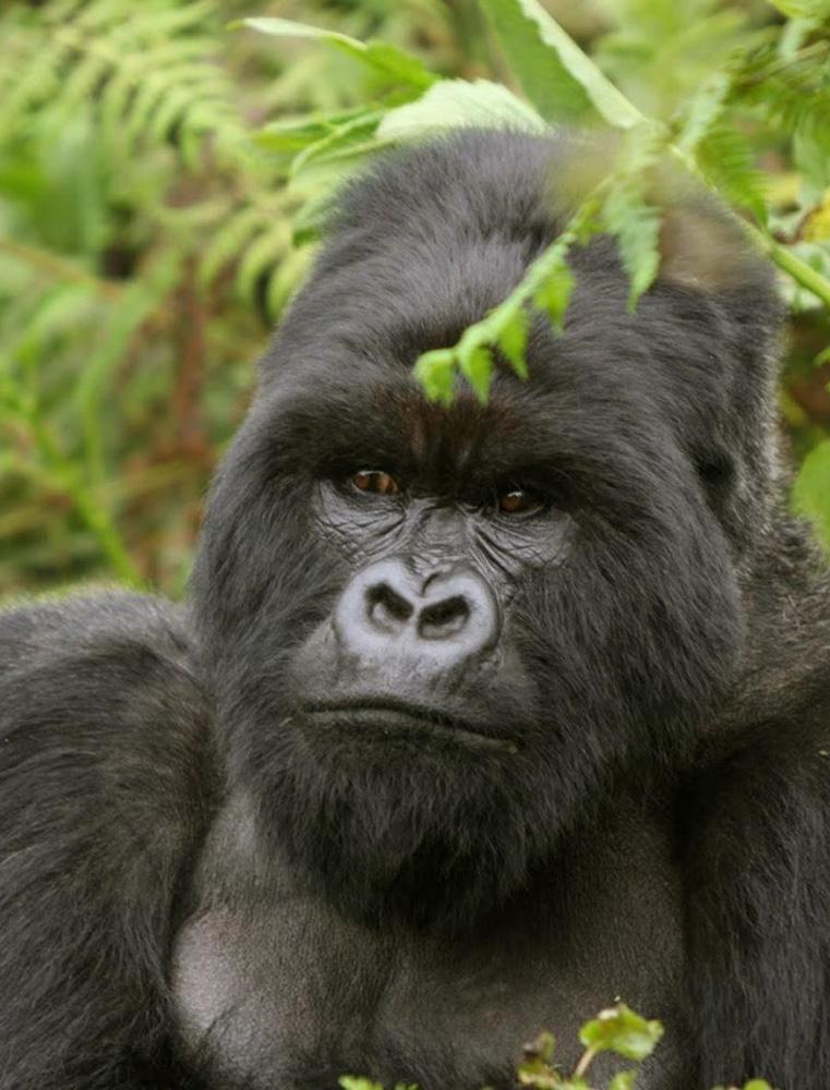 Budget Gorilla tour Equipment